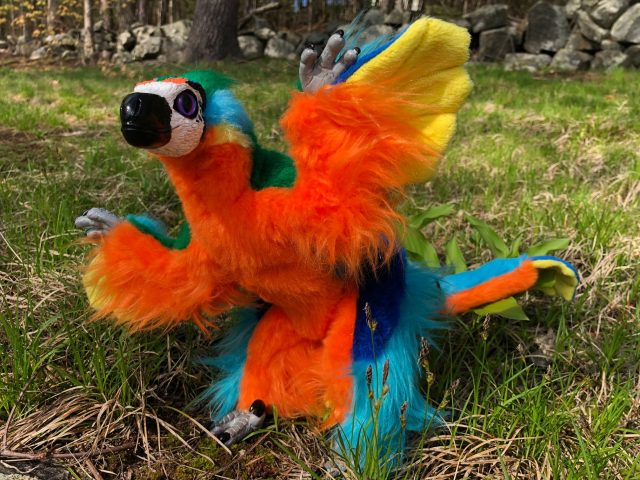 Microraptor Xing Commission Art Doll
