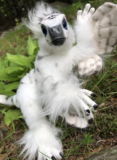 snowy-raptor